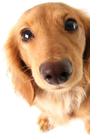 Hemp oil can also have a very positive effect on dogs.